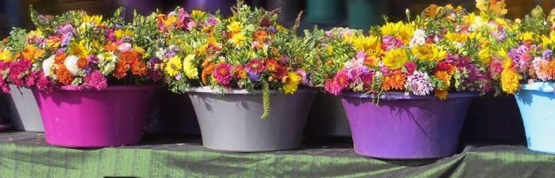 colorful flower pots