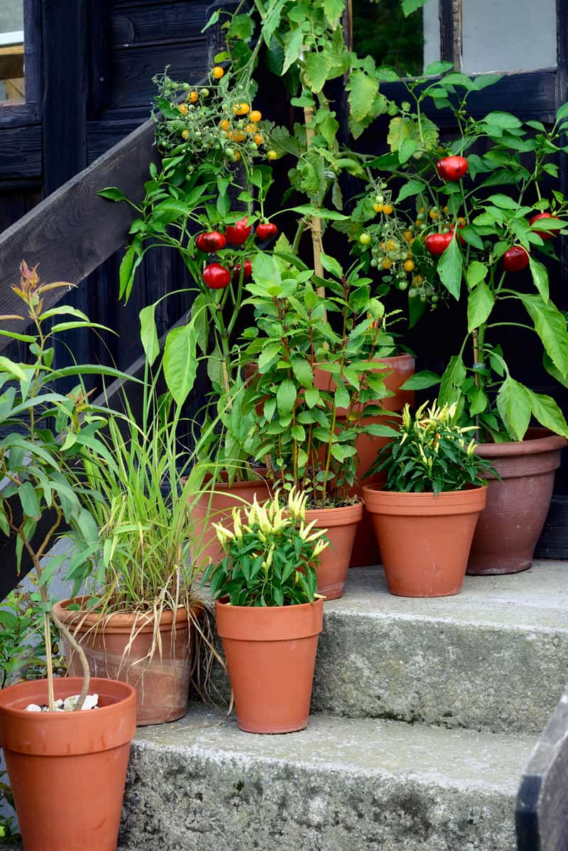 If you don't have a lot of space, you can garden in containers and still enjoy fresh vegies
