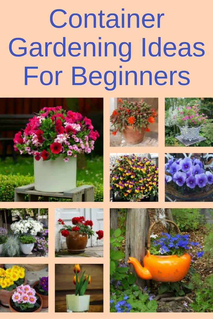 Container gardening ideas for beginners for Garden designs for beginners