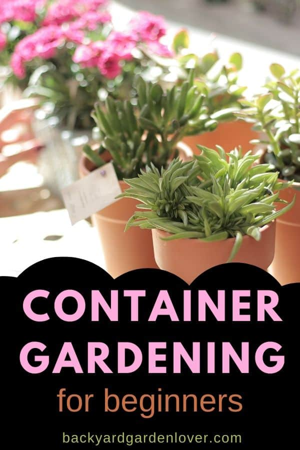 If you want more color in your front yard, but don't have enough time for a whole garden, you'll love these container gardening ideas for beginners. #containergarden #gardenpots #smallgarden #gardening #smallspacegardening