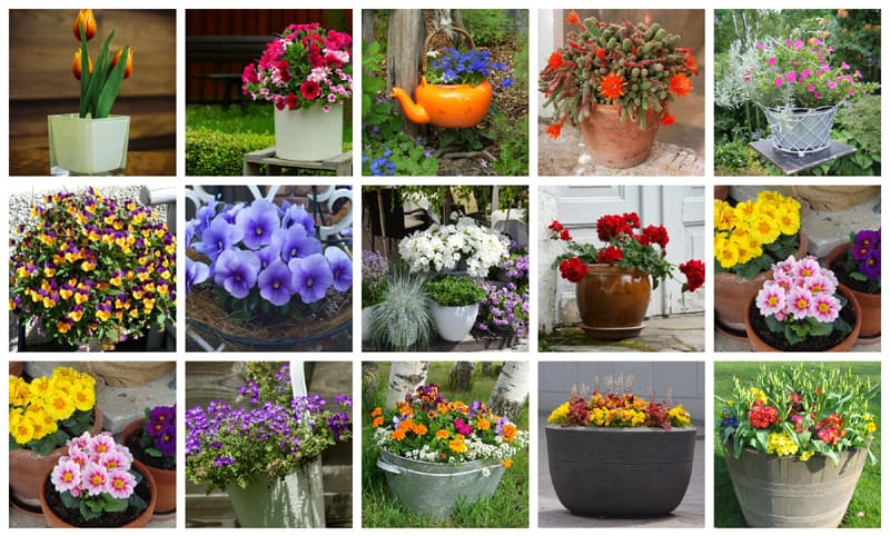 Lots of container gardening ideas