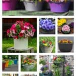 18 Gorgeous Container Gardening Ideas For Beginners