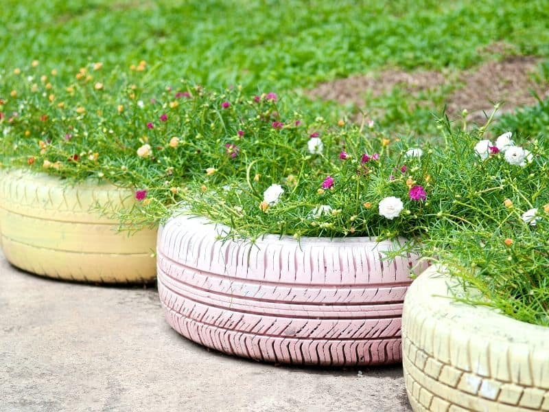 Colorful flowers planted in painted old tires