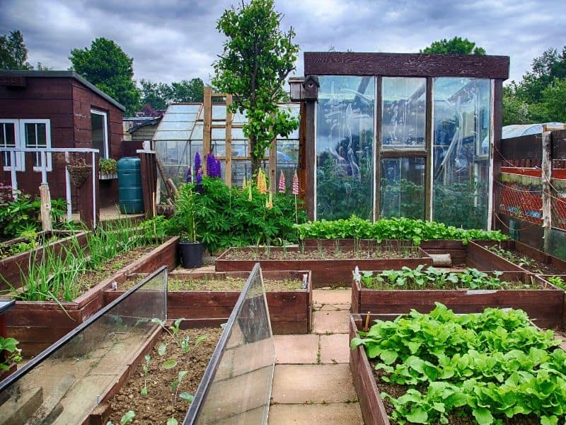 A greenhouse and several raised beds, neatly organized