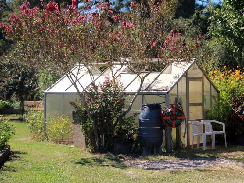 Greenhouse with wooded area in the back