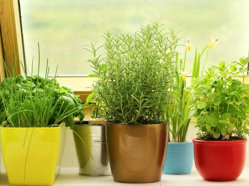 Containers of kitchen herbs