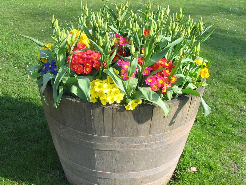 Container Gardening Ideas For Beginners | Backyard Garden ...