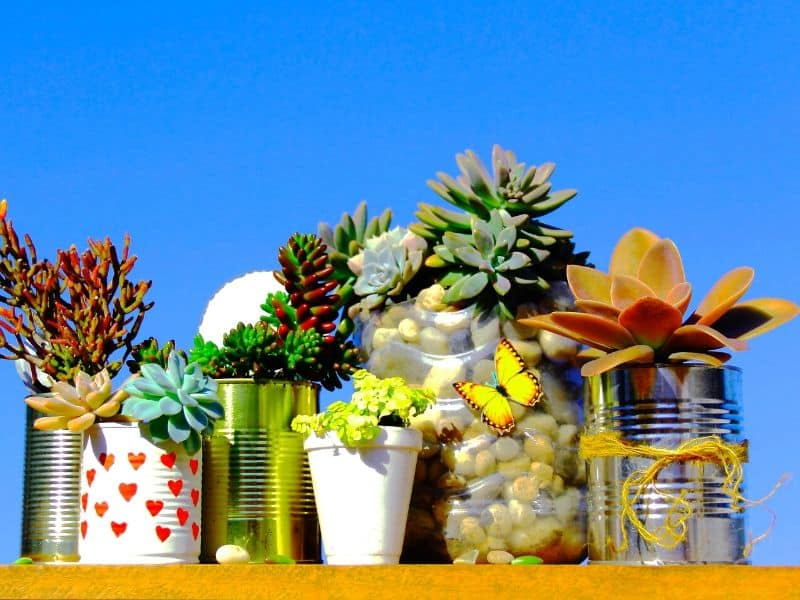 Succulents in painted cans