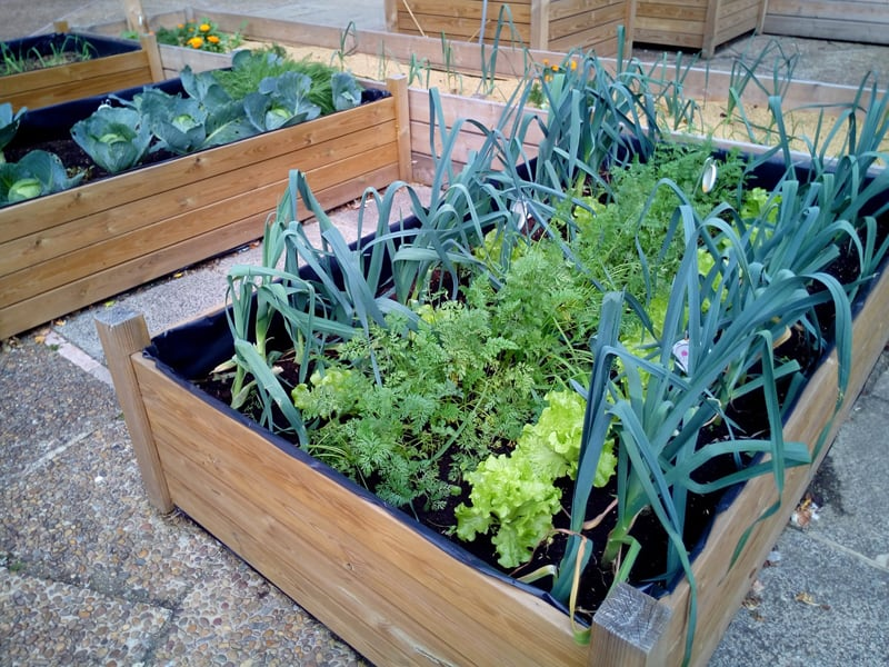 A raised bed garden is easier on your back while still perfect for growing lots of delicious produce
