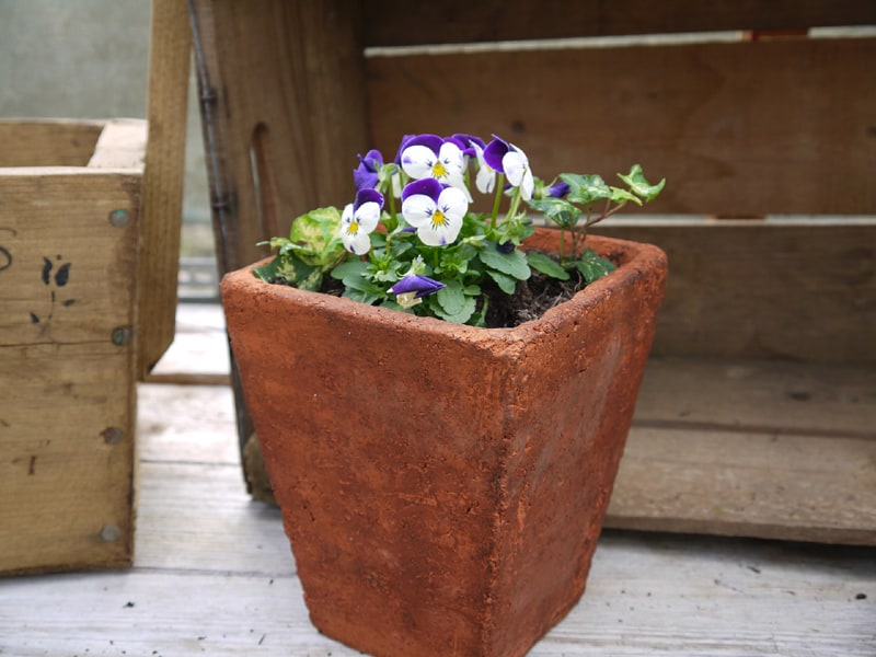 terracotta pot of pansies