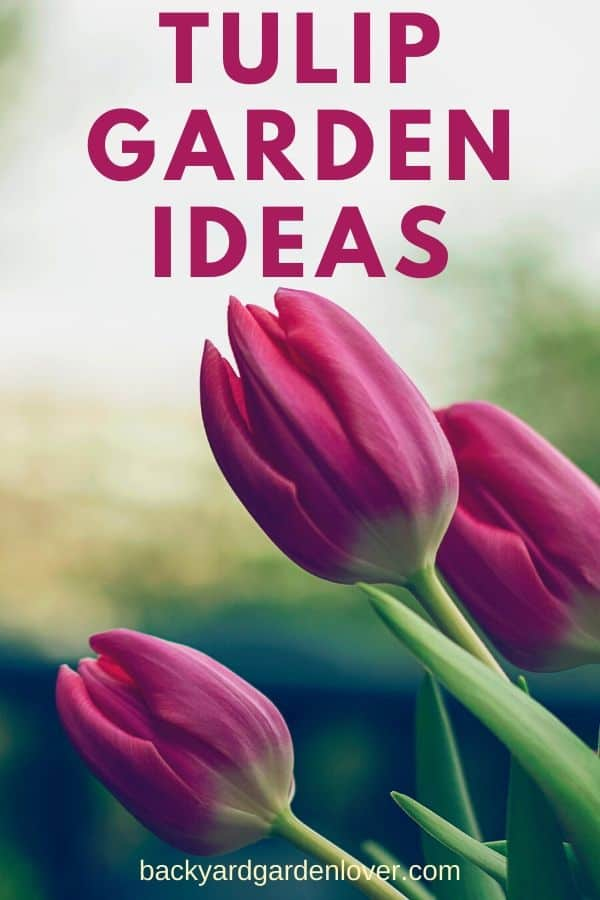 Ever wished for a colorful spring garden? There are so many types of tulips you could plant! Here are a few inspiring tulip garden ideas to get your imagination going. #tulips #springflowers #springgarden #flowers #flowergarden