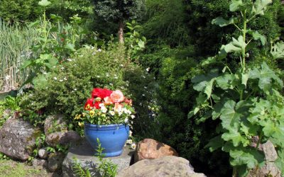 Garden mistakes you can easily avoid