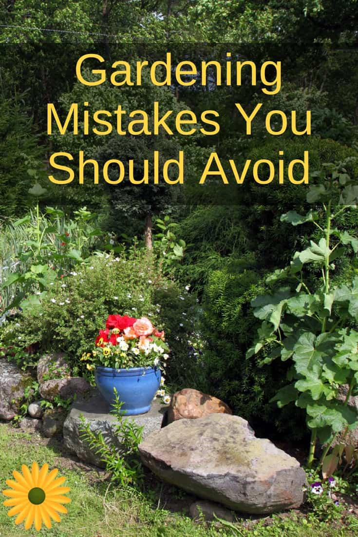 Here are just a few common gardening mistakes you can easily avoid