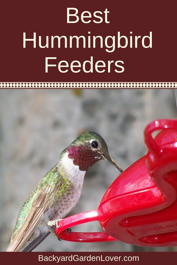 Hummingbird eating from red feeder