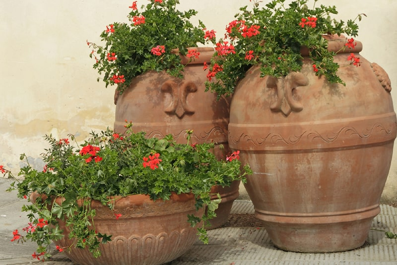 ceramic planters with red flowers