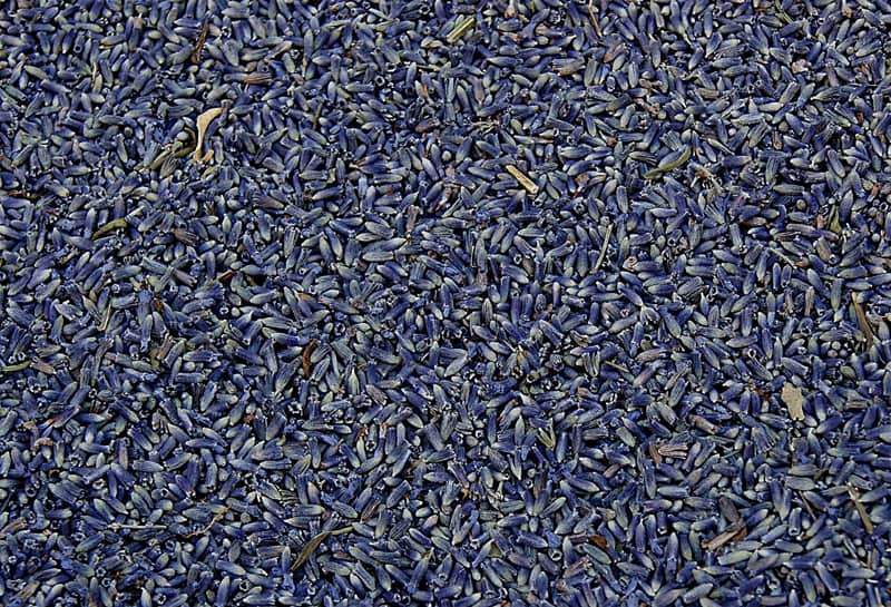 dried lavender ready for making sachets, tea, soaps, and other homemade projects