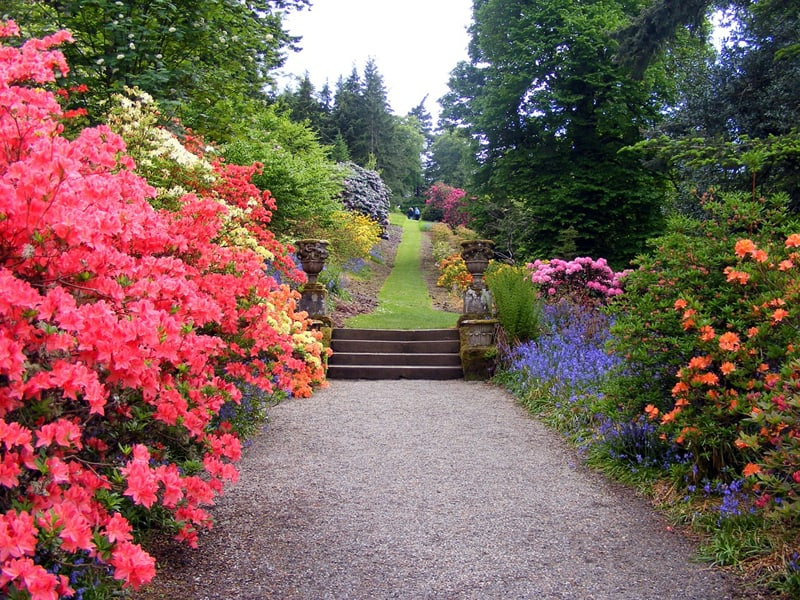 This simple path is made of small gravel and surrounded by stunning azaleas and other brightly colored flowers.