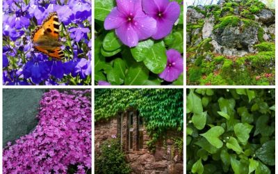 Colorful ground covers