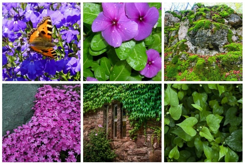 Colorful ground covers collage
