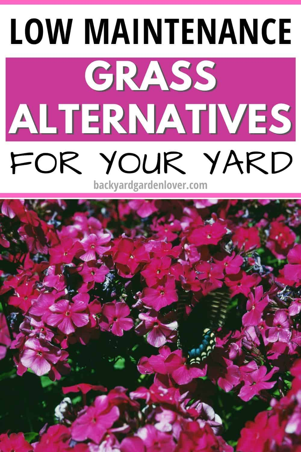 Low maintenance grass alternatives for your yard