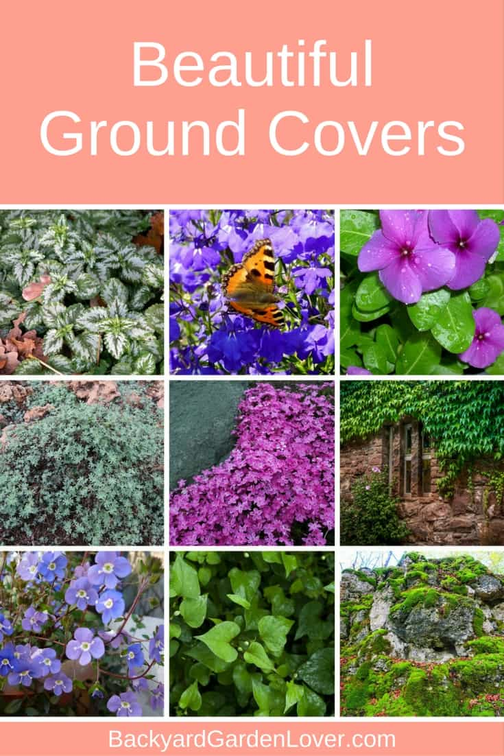 Cover unsightly spots in your garden with one or more of these beautiful perennial ground covers #landscaping #backyard #perennials #home