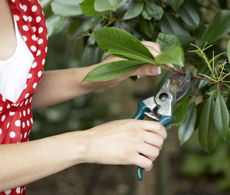 woman pruning a tree branch