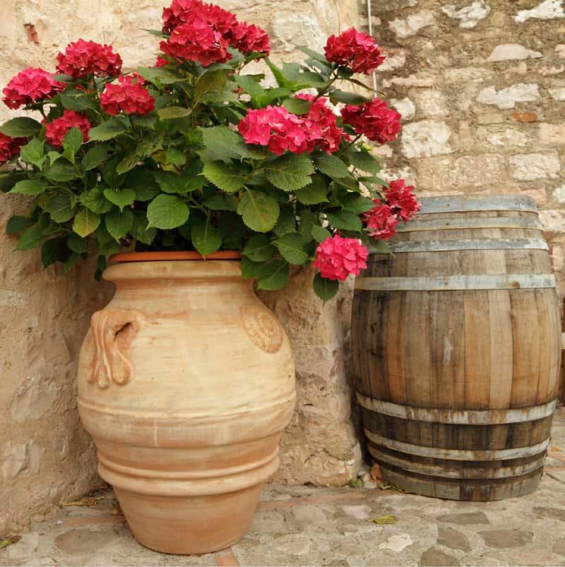 red hydrangea ceramic planters