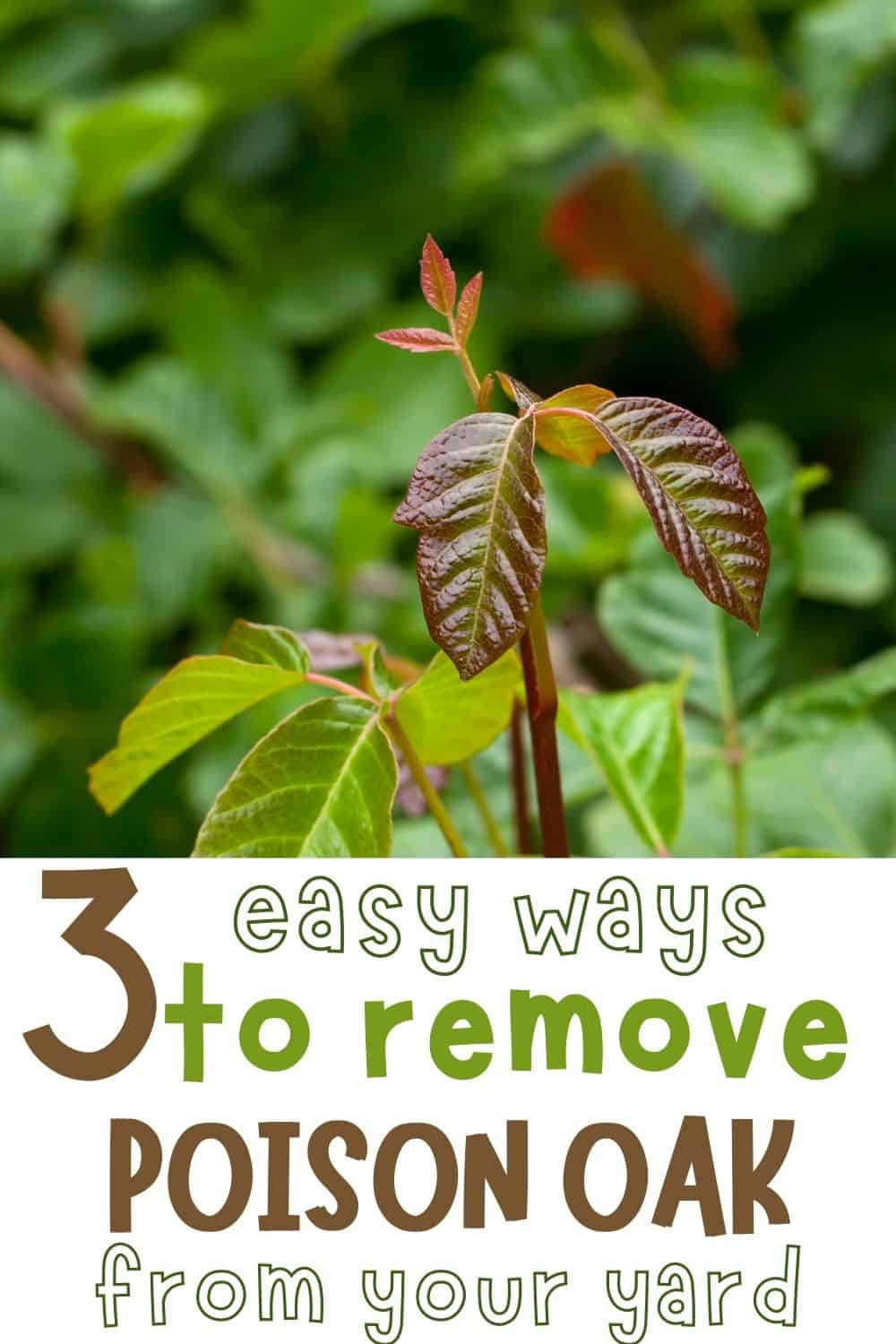 3 easy ways to remove poison oak from your yard
