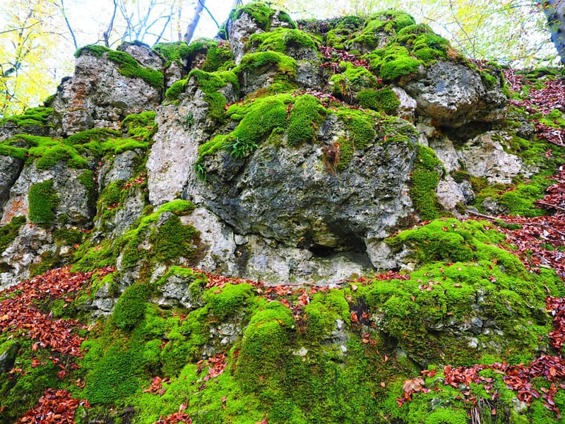 stone moss over a rocky cliff
