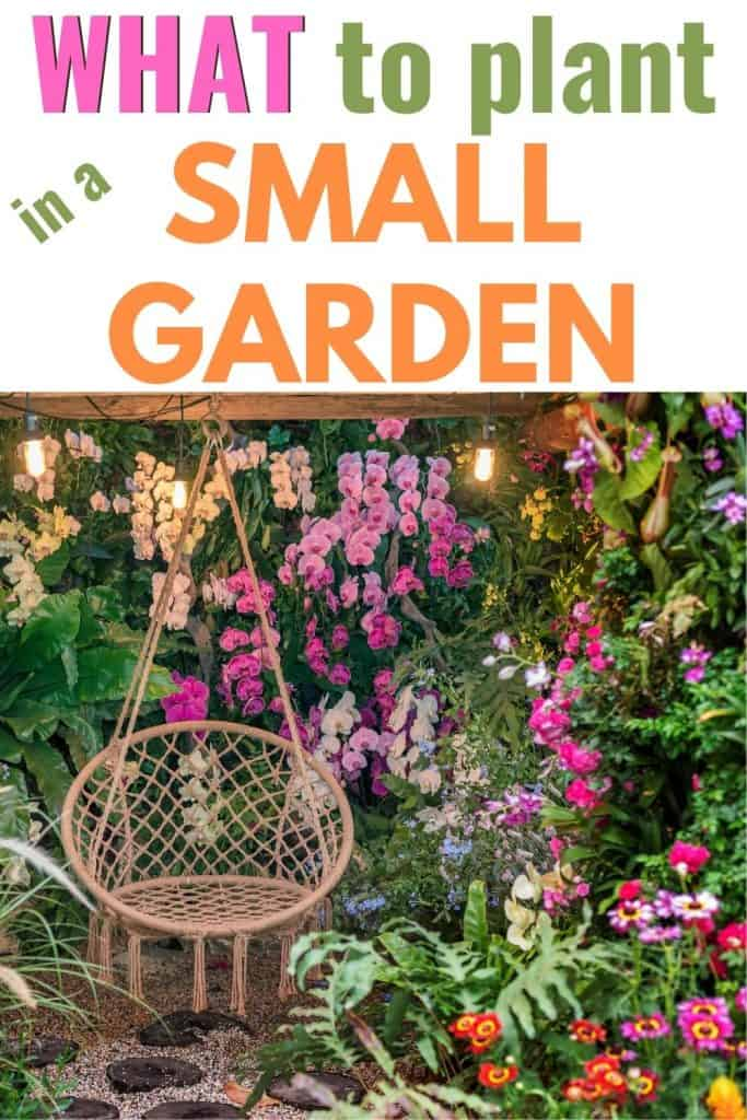 What to plant in a small garden