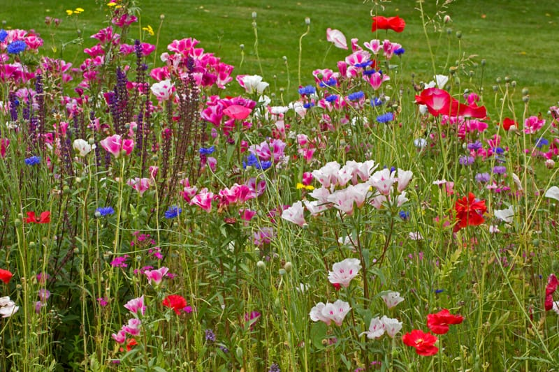 a field of red, pink and blue wildflowers