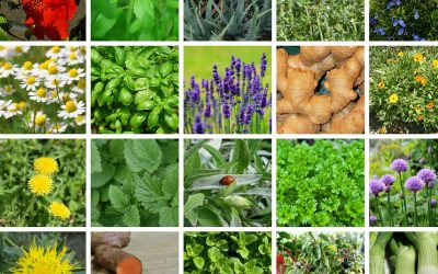 Medicinal Plants You Can Grow In Your Garden