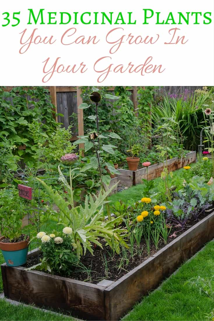 35 Medicinal Plants You Can Grow In Your Garden