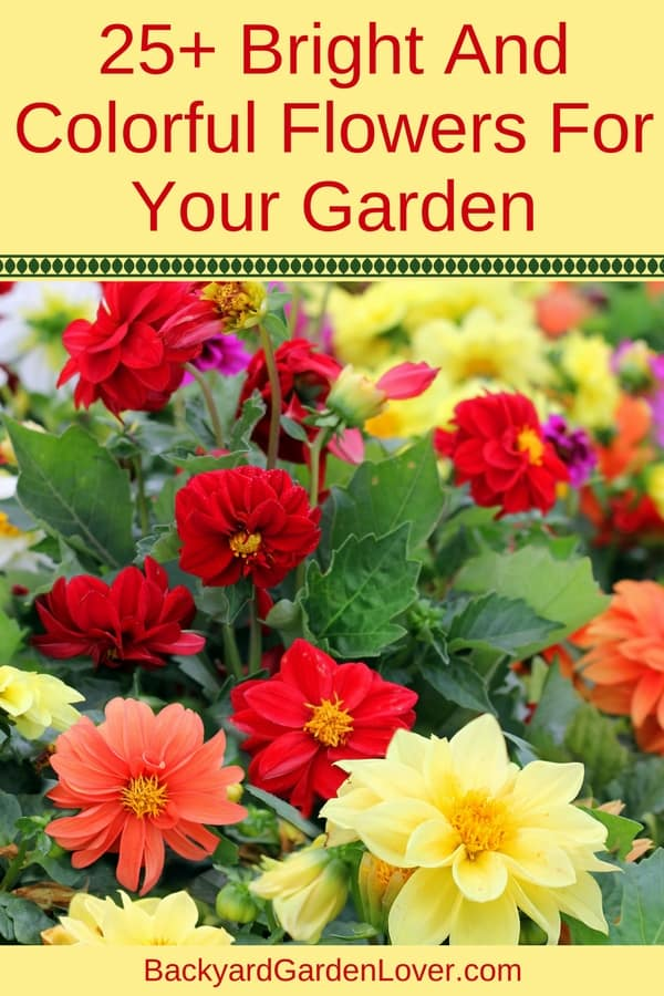 Wonder how you can add a pop of color to your front yard? Here are lots of ideas for colorful flowers for the garden or landscaping: some annuals, some perennials, all beautiful!