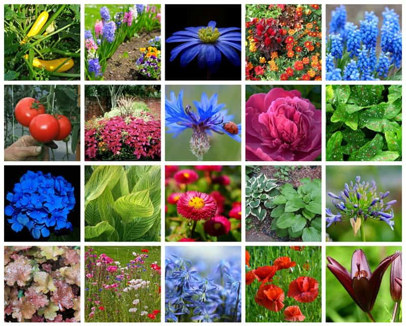 collage of beautiful colorful flowers