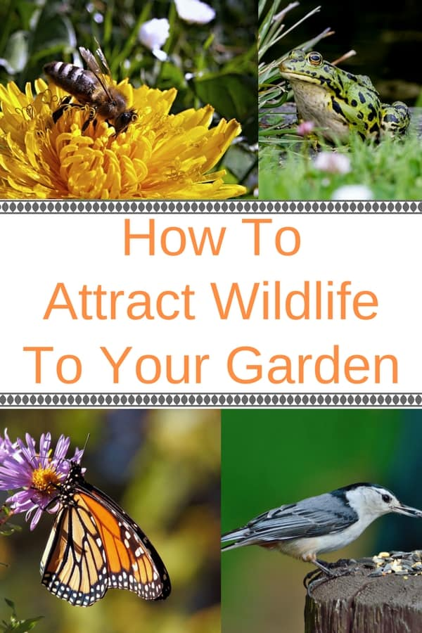 Looking to attract some wildlife to your garden? See how to provide what they need (water, food and shelter) to invite birds, butterflies, bees and other beneficial wildlife into your backyard. Learn which plants, shrubs, trees, grasses and flowers to plant to make sure your garden becomes a haven for wildlife.