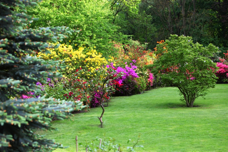 Colorful flowering shrubs in a spring garden in shades of yellow, pink and red bordering a neatly manicured lush green lawn with a backdrop of dense trees