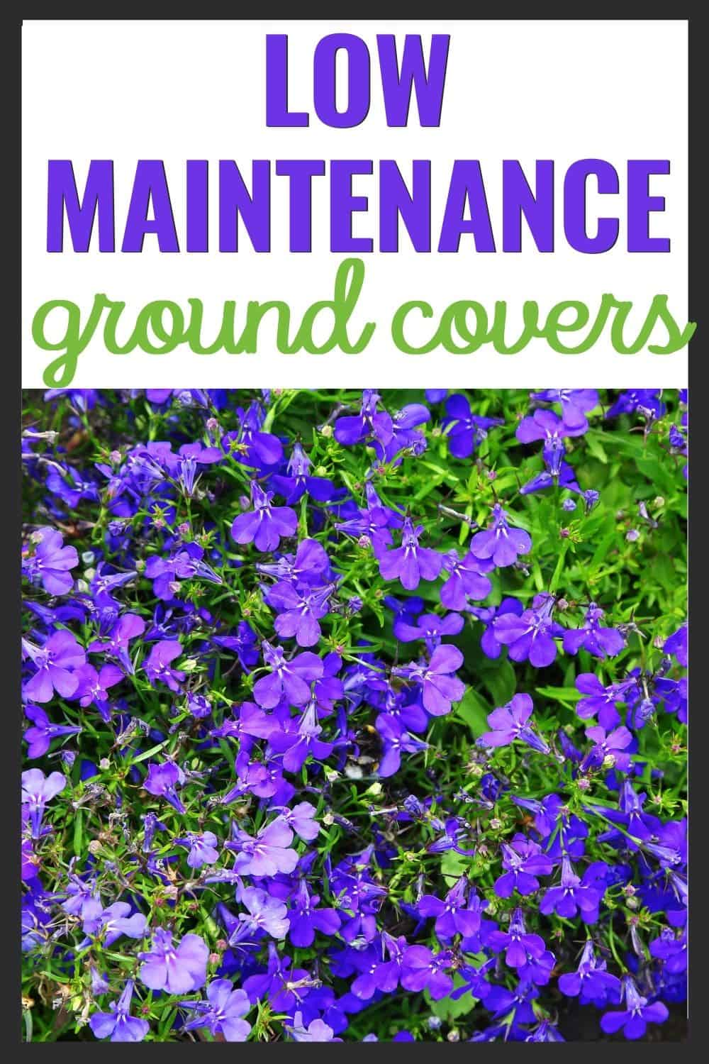 Low maintenance ground covers