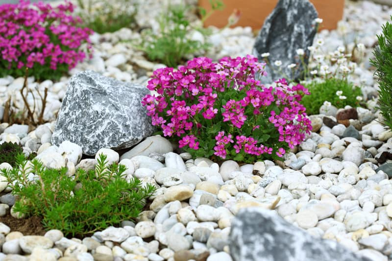 beautiful rock garden