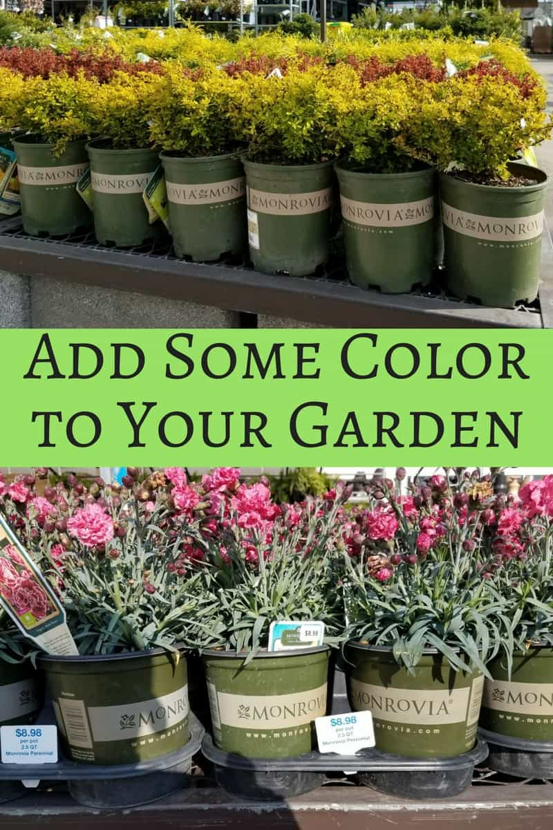 Here are some great ways to add some color to your garden