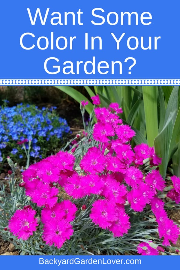 Would you like to add some color to your yard? Create an inviting atmosphere with beautiful perennials and annuals you plant in raised beds, planters for the patio, or straight in the ground. Your backyard space can be a colorful oasis you can relax in after a hard day at work.