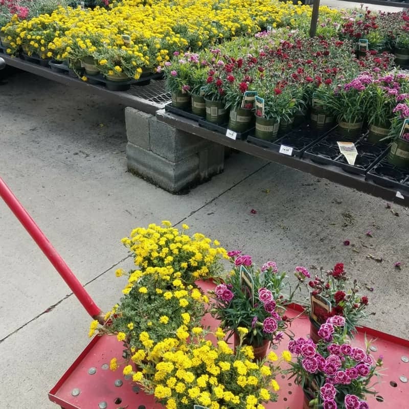 Check out these beautiful Monrovia plants I found at Lowe's