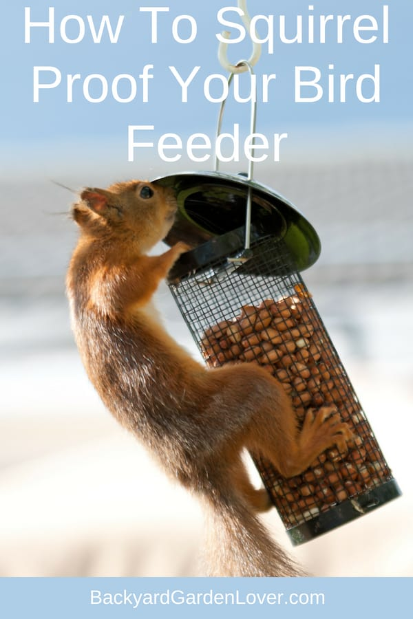 Here are some tips on how to keep squirrels away from your bird feeders. You can use metal or plastic baffles, netting and even attach a slinky to the bird feeder pole. Take a look and see how you too can squirrel proof your feeders.