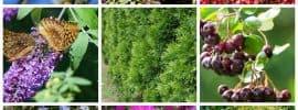Landscaping Shrub Ideas