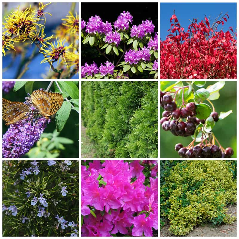 a collage of blooming shrubs