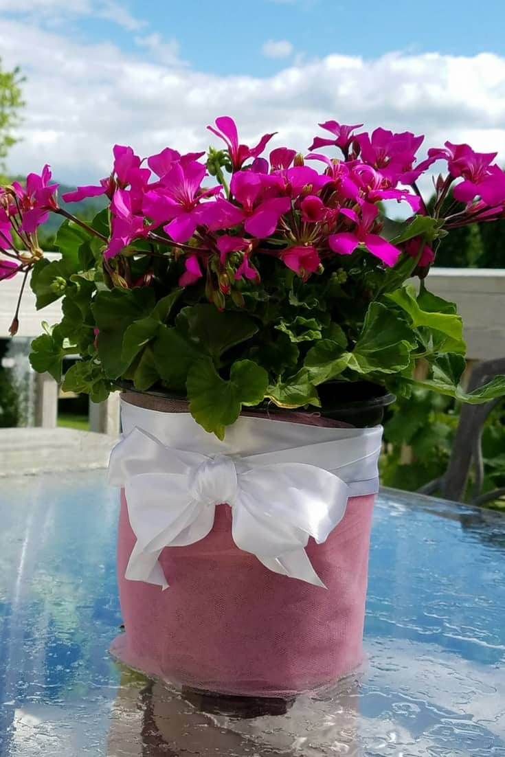 This hot pink Caliente Geranium is perfect for my outdoor table. Makes it more inviting and it;s a great conversation starter