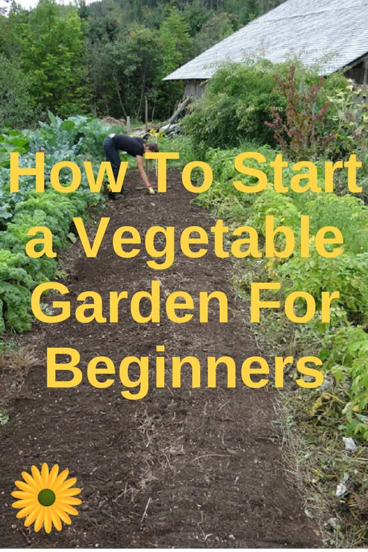 Learn How To Start A Vegetable Garden For Beginners Without Stressing Yourself
