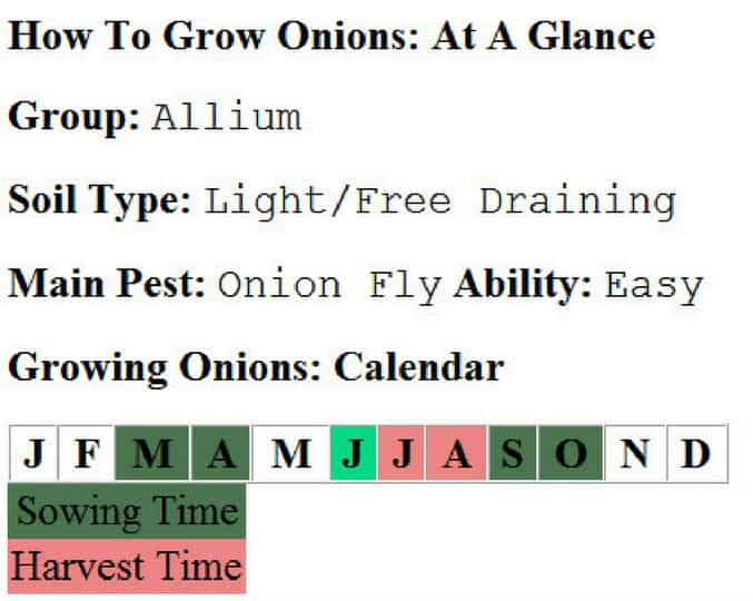 how to grow onions in your garden