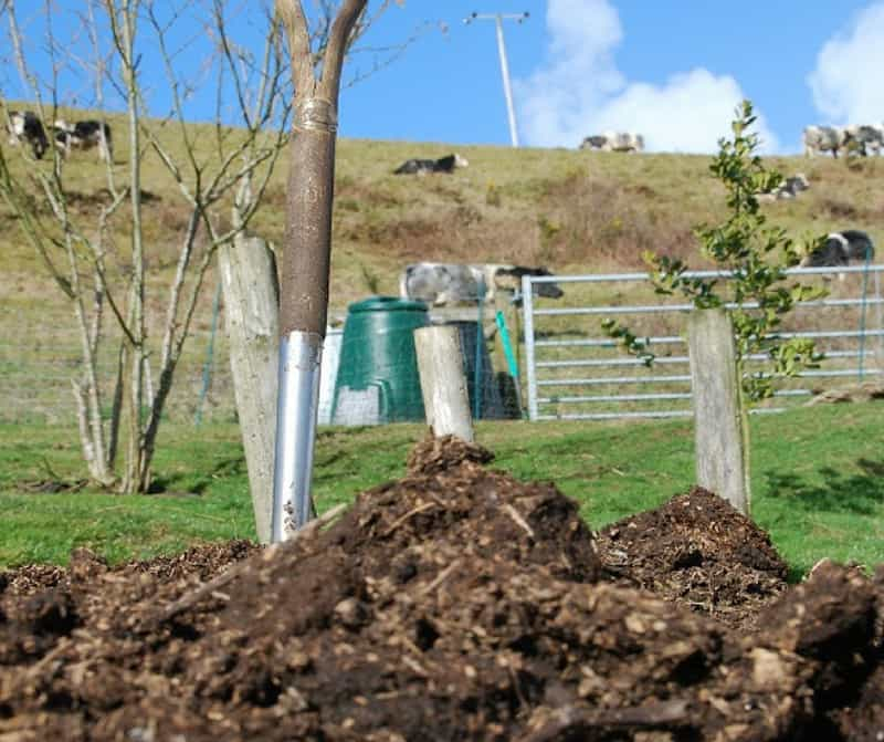 adding manure to the garden