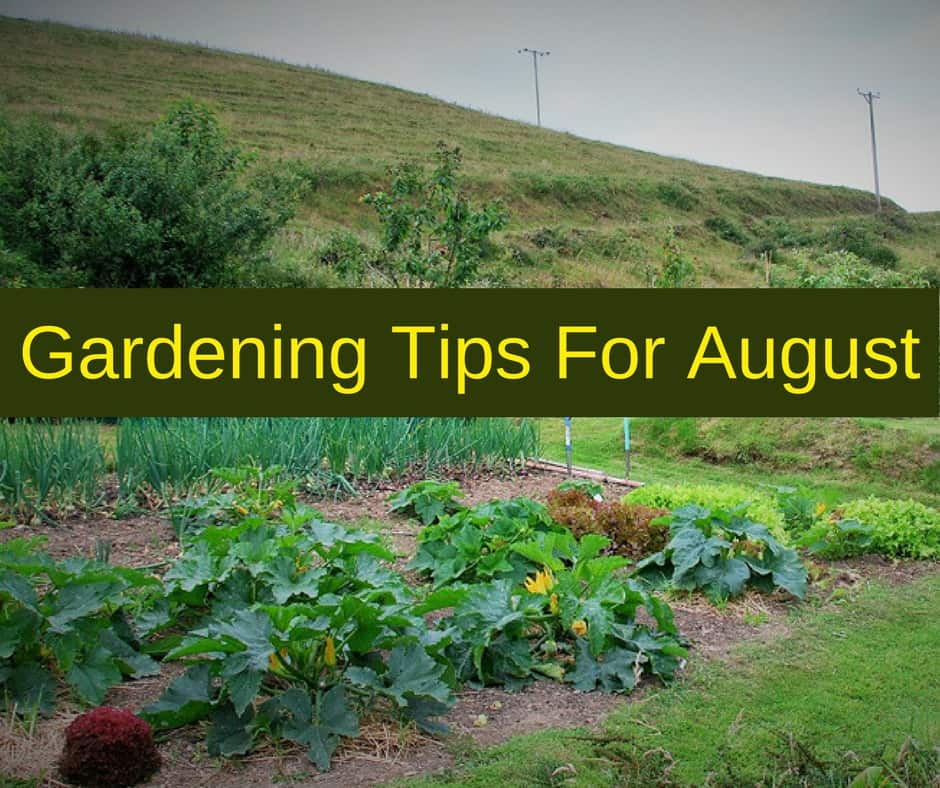Top 28 gardening tips for june backyard pinterest for Gardening tips